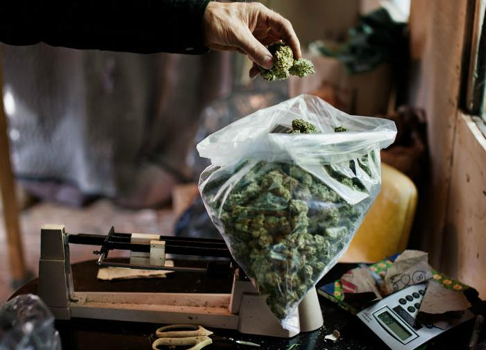A+marijuana+farmer+in+Humboldt+County%2C+California%2C+weighs+his+product.+While+Proposition+64+will+allow+farmers+to+grow+the+plant+legally%2C+its+new+regulations+and+taxes+threaten+the+livelihood+of+the+small+farmers+who+previously+dominated+the+industry.+Photo+courtesy+H+Lee.