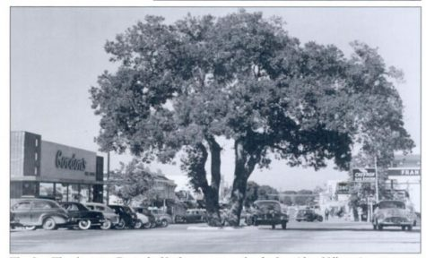 A large oak tree on the intersection of Main and First Streets, decorated annually by the volunteer fire department for the holidays. Photo courtesy Don McDonald.