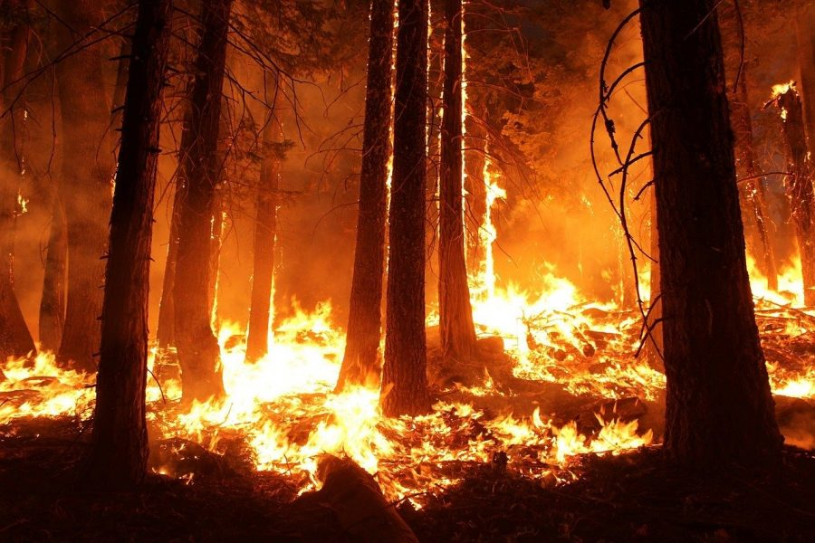 California+Fire+Updates